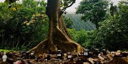 Tree & Meds