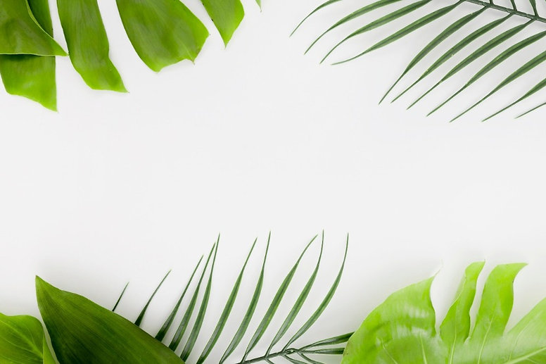 top-view-thin-plant-with-monstera-leaves