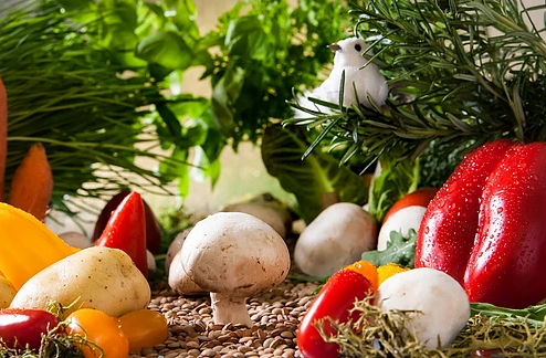 "Nature's ""Smart Drugs"": Mushrooms, Culinary Delights and Medicinal Magic"