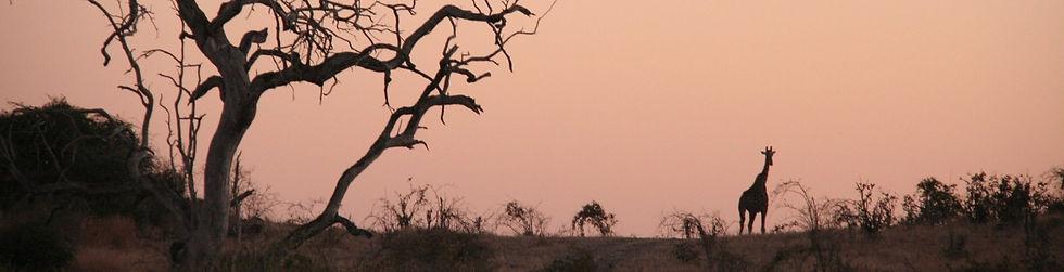 Botswana_Girafenbild_edited_edited_edited.jpg