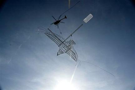 G-BIOA falcon flying
