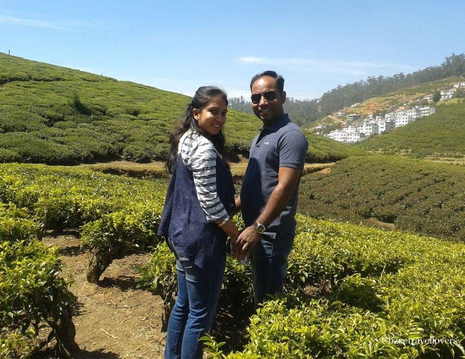 Ooty tea gardens