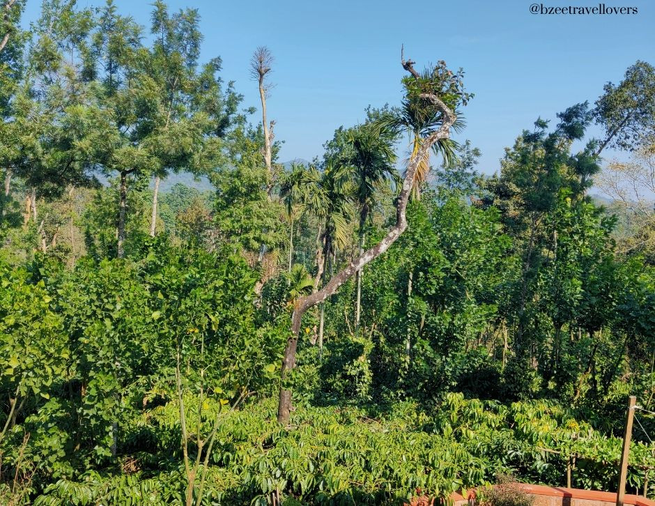 Estate tour in Coorg