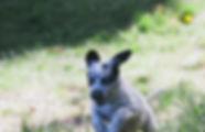 Austre20170526_0045.jpg