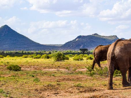 SW Samburu by Faith Kanja
