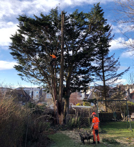 Hazerdous Tree Removal