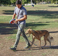 dog walking with an owner in park