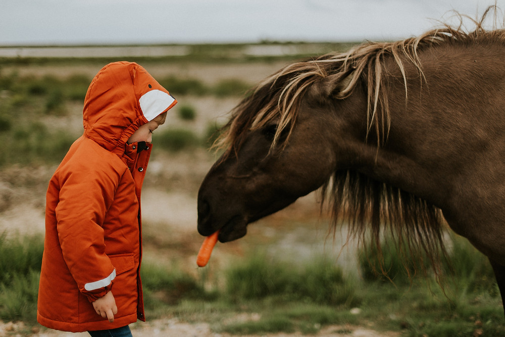 boy in jacket feeding carrot to a horse