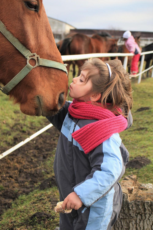 girl kissing horse's nose