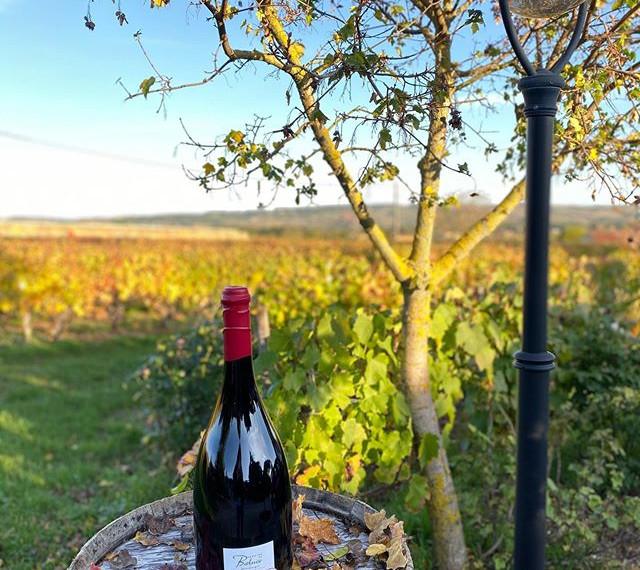 Jéroboam Vieilles Vignes, rouge