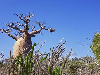 baobab3.jpg