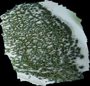 Mangroves Area - Abu Dhabi