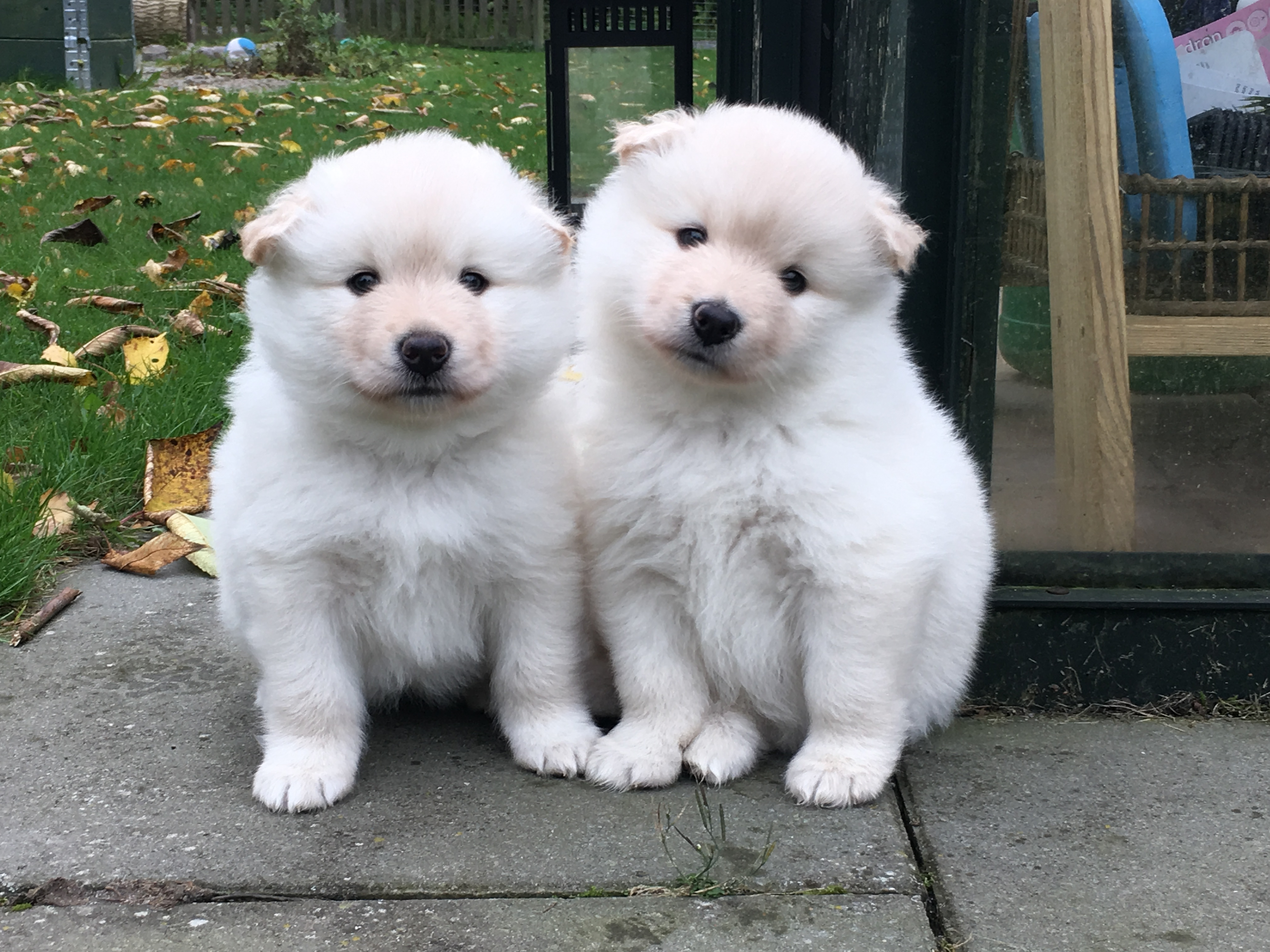 Kaunis Unelma Beautiful Miss Opal og Pyr