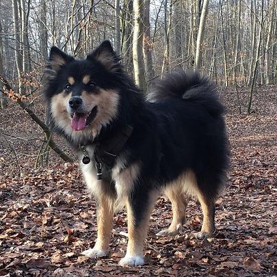 Lucy i hundeskoven.jpg