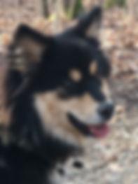 Lucy smilende ansigt.JPG