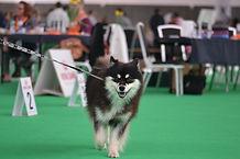 World Dogshow teamkaunisunelma.JPG