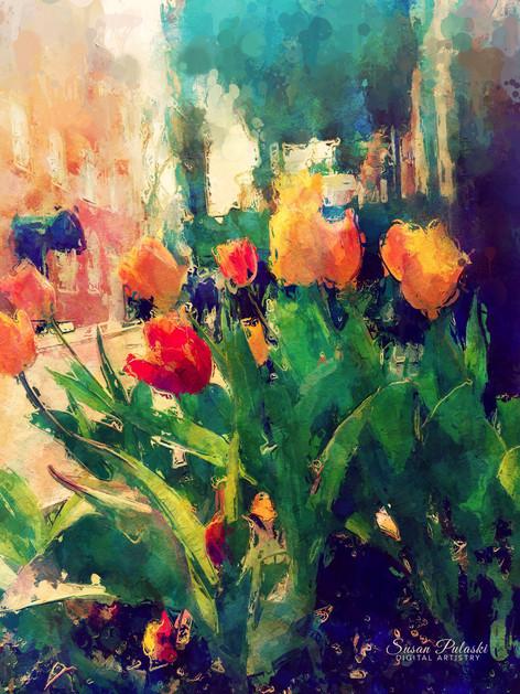 Newburyport Tulips
