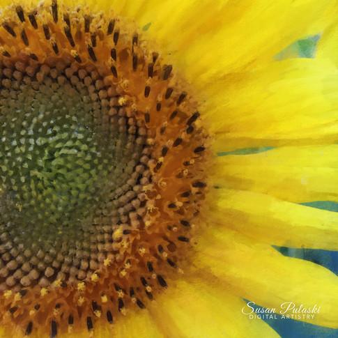 Painted Sunflower 3