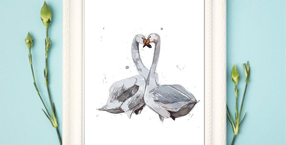Swans - Framed Print