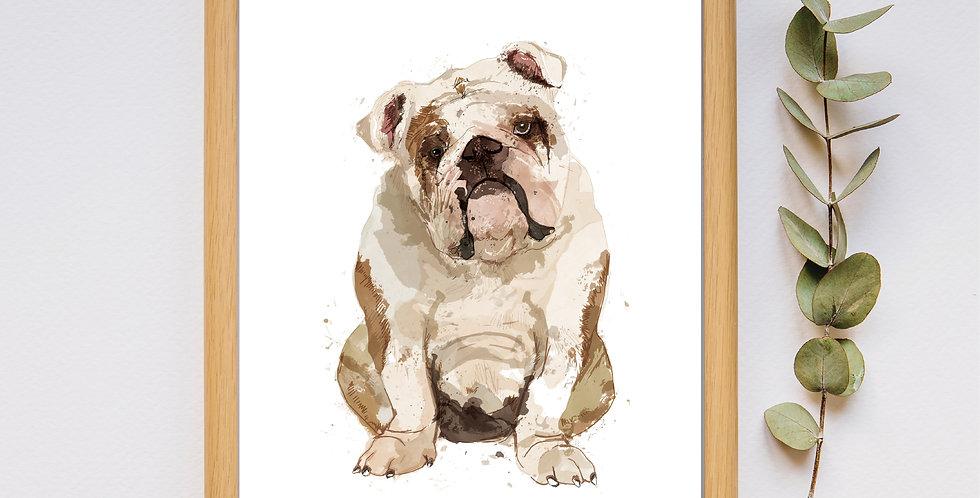 Bulldog - Framed Print