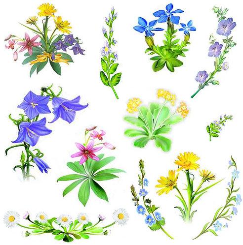 Jarní luční květy