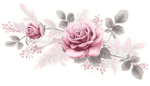 Purpurová růžička