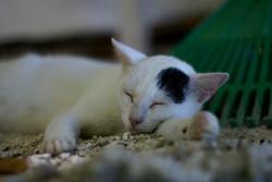 cat19