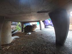 cat56