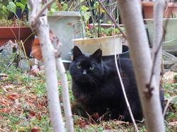 cat54