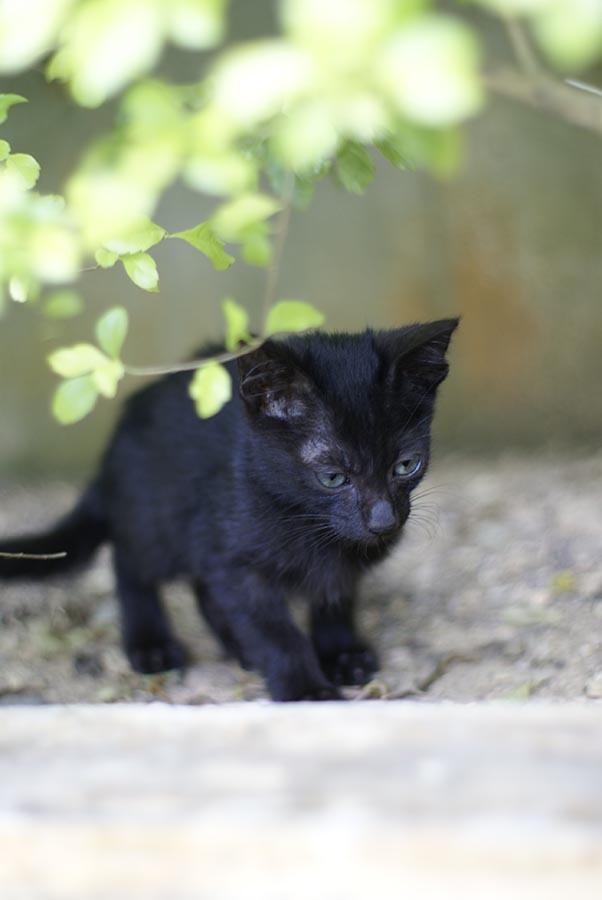 cat26