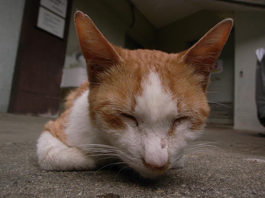 cat45