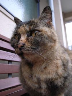 cat33