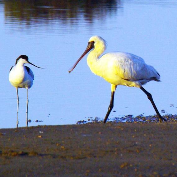 birdwatching_anping