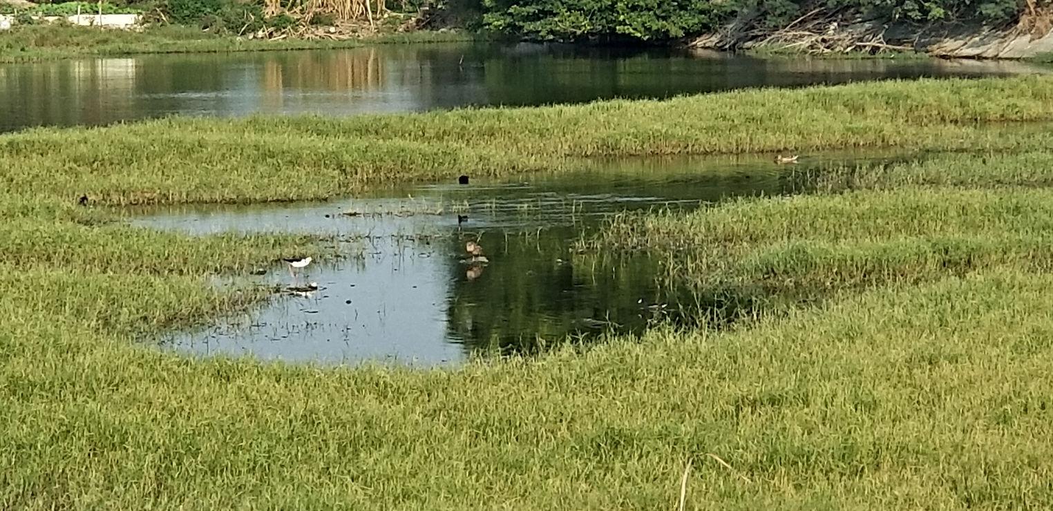 湖濱水鳥公園birdwatching_anping