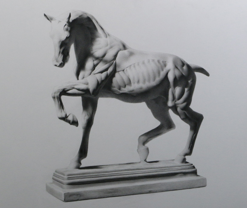 Cast drawing in graphite by Sadie Valeri - flayed horse