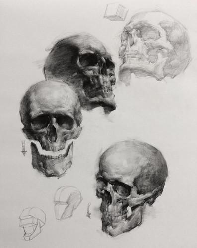 Skull drawings by Jacob Hankinson