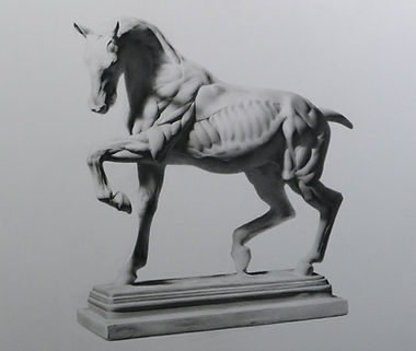 Cast drawing in graphite pencil of a horse by Sadie Valeri