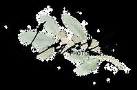 Logo olive 3.png