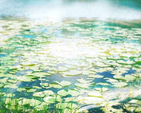 Nature & Landscapes • Lily Pad Pond