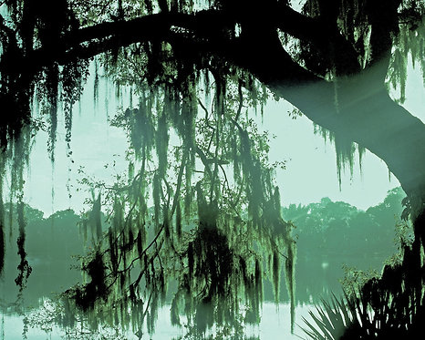 Nature & Landscapes • Spanish Moss Daydream