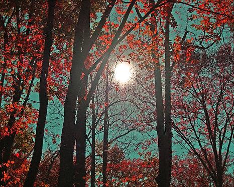 North Carolina Landscape Art • Red Autumn
