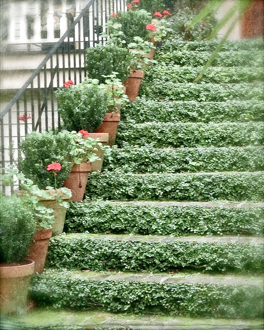 Nature & Landscapes • Ivy Steps