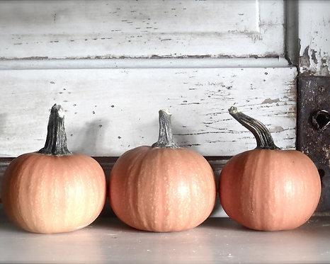 Kitchen & Bath Wall Decor • Pumpkin Trio
