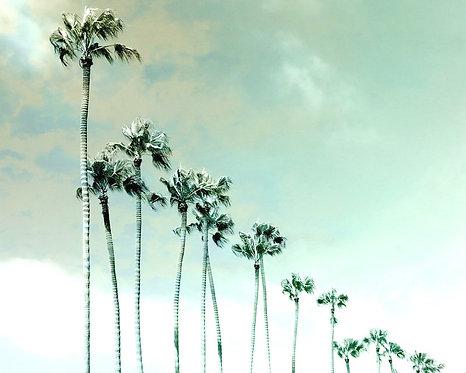 Beach & Coastal • Parade of Palms