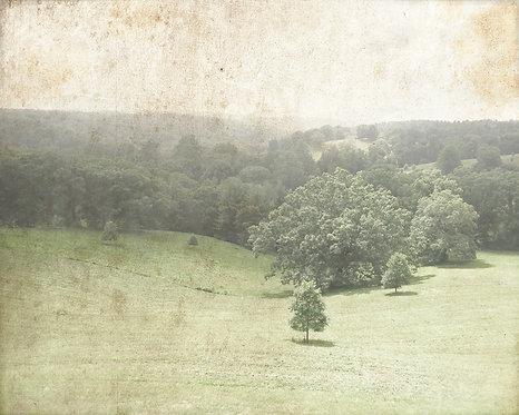 Nature & Landscapes • Rolling Hills