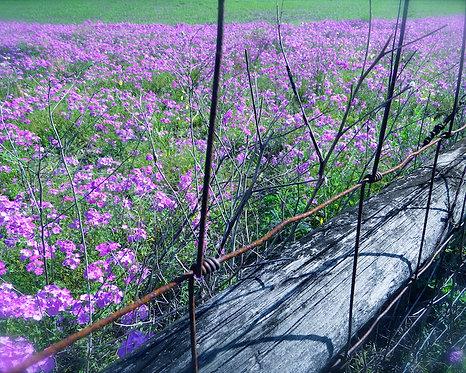 Nature & Landscapes • Violet Rush