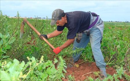 """وضعية القطاع الفلاحي..الحالة العامة لنمو المزروعات """"جيدة"""""""