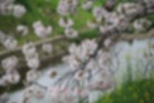 全体のバランスを整えることと桜