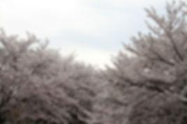 大阪本町鍼灸 医療と治療とヒーリング