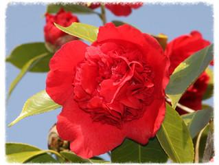 花と美 3